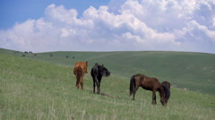 Horses on a Hilly Pasture HD Stock Footage