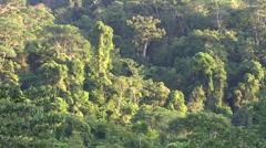 Sunrise over rainforest 1 Stock Footage