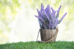 A bunch of violet flowers on a wooden pot in green grass - stock photo