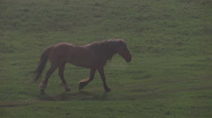 Horse in Morning Fog HD Stock Footage