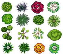 Different kind of plants - stock illustration