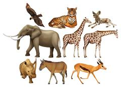 Various kind of wild animals - stock illustration