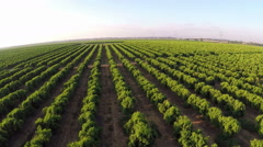 Aerial shot of orange groves and farm land - stock footage