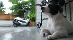 Sad Cute Dog Sitting Outdoors While Raining Stock Footage
