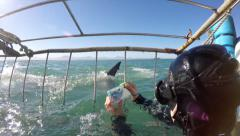 Great white shark cage diving POV from the cage - stock footage