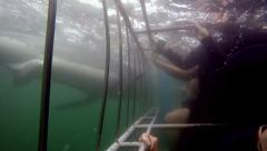Great white shark cage diving underwater POV Stock Footage