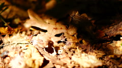 Forest soil with ants, dead leaves and tiny sapling Stock Footage