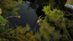 Spider meal timelapse Stock Footage