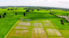 Aerial view shot rice field in countryside of thailand Stock Footage