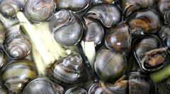 Cooking snails - stock footage