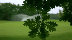 Branch of an oak in front of a meadow with sprinkler Stock Footage