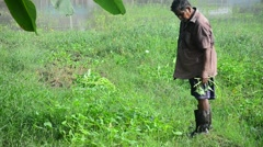 Thai farmer harvest morning glory at garden Stock Footage