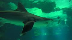Close Up Shark In Aquarium Stock Footage