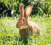Smiley bunny in green grass - stock photo