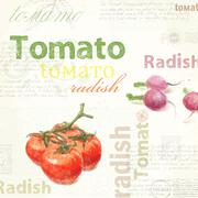 Kitchen art. Watercolor vintage tomato - stock illustration