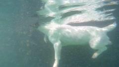 Puppy Dog Swimming Underwater Stock Footage