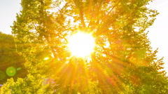 Lens flare. Sun through leaf foliage. Stock Footage