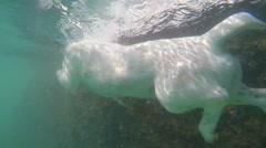 Jack Russel Terrier Dog Swimming Underwater Stock Footage