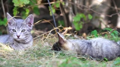 Cats playing on farm garden summer grass Stock Footage