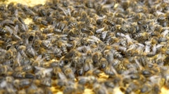 4k concentration hundreds bees beehive working organic honey pollen honeycomb Stock Footage