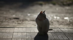 White cat sitting in the morning at dawn, the sun heats the sun silhouette tile Stock Footage