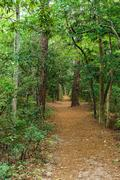 A beautiful woodland path in the First Landing State Park, Virginia Beach Kuvituskuvat