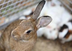 young rabbit inside the Warren farm - stock photo