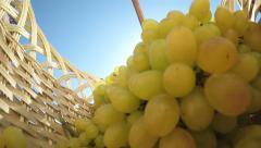 Slow Motion: Female gardener placing seedless white grape bunches inside basket Stock Footage