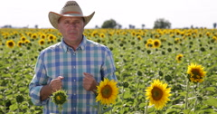 Farmland Sunflower Crop Farmer Talk Good Results Agrarian Genetically Research Stock Footage