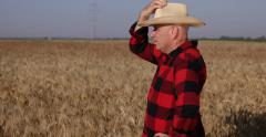 Satisfied Proud Confident Farmer Cowboy Hat Looking Wheat Ripe Farmland Harvest Stock Footage