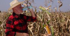 Corn Field Torrid Midday American Farmer Cowboy Hat Drink Plastic Bottle Water Stock Footage