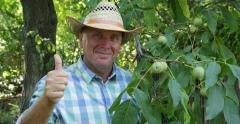 Walnut Orchard Smiling Farmer Present Satisfied Good Harvest Thumbs Up Gesture Stock Footage
