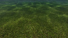 Clean Water Surface Reflation Green Grass Stock Footage