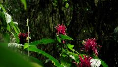 Tropical flower in atlantic forest Stock Footage