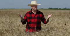Rich Farmer Man Proud Wheat Field Abundance Harvest Crops Agriculture Concept US Stock Footage