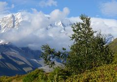 Birch tree in Caucasus mountains,Upper Svaneti ,Georgia Stock Photos