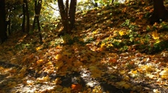 Maple leaves fall in an autumn park - stock footage