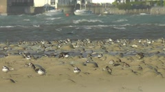 Waders running around on the beach with water rushing through the estuary Stock Footage