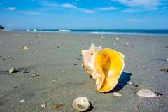 Stock Photo of sea shell on a beach of atlantic ocean at sunset