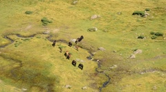 Herd of horses on summer pasture near small brook in mountains Stock Footage