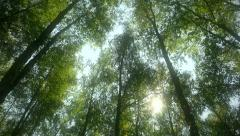 Romantic sunny forest in a dream, fluff  flying in the air Stock Footage