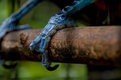 Close up toucan claw Stock Photos