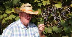 Winemaker Tasting Wine Grape Vine Vintner Farmer Man Pick Check Harvest Vineyard Stock Footage