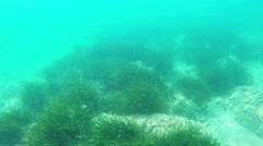 Underwater background - stock footage