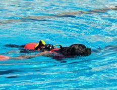Lifeguard dog Stock Photos