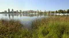 Reeds, schoenoplectus and Water Lilies in the River Stock Footage