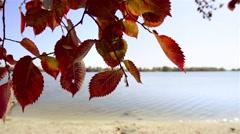 Red Elm Leaves - stock footage