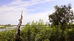 Burnt Tree Trunk Stock Footage