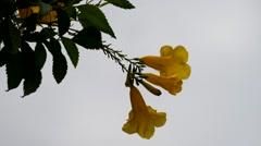 Yellow flowers waving in wind Stock Footage