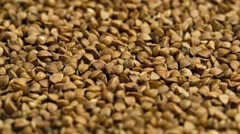 Buckwheat - stock footage